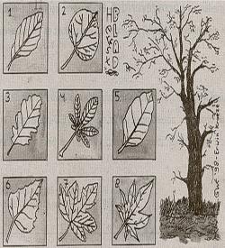 Herfstbladeren zoeken soorten puzzel